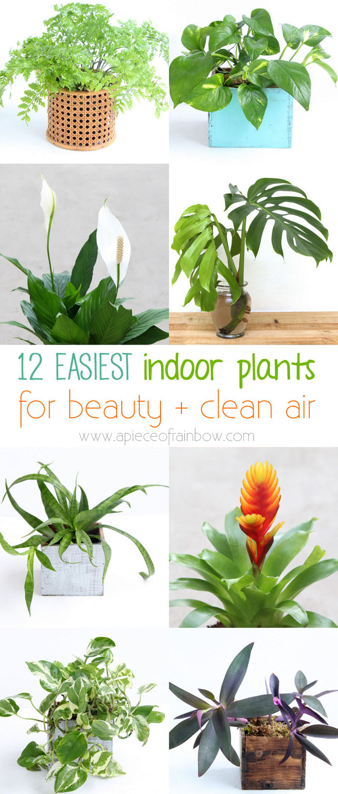Best Plants To Keep Your Air Clean Movewithgreens